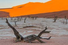 C1246 Namibia Dead Vlei