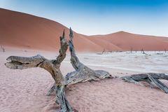 C1248 Namibia Dead Vlei