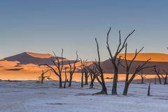 C1249 Namibia Dead Vlei