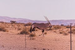 C1255 Namibia - Wegbegleiter