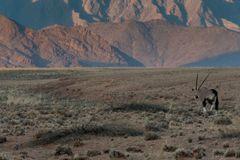C1261 Namibia Oryx