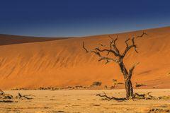 C1262 Namibia - Dead Vlei