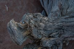 C1265 Namibia -  Dead Vlei