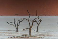 C1275 Namibia -  Dead Vlei