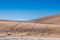 C1286 Namibia -  Sossusvlei - Spuren