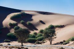C1289 Namibia -  Sossusvlei