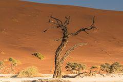 C1292 Namibia -  Dead Vlei