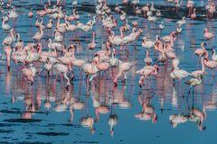 C1294 Namibia - Walvis Bay - Flamingos