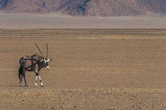 C1335 Namibia -  Sossusvlei - Düne 45