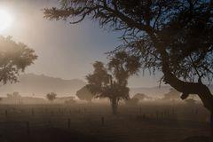 C1337 Namibia -  Sossusvlei