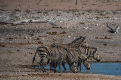 C1344 Namibia - Etosha