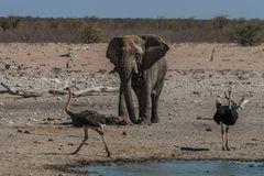 C1346 Namibia - Etosha
