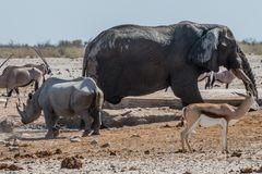 C1363 Namibia - Etosha