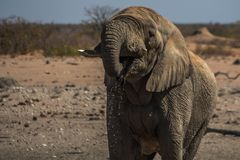 C1365 Namibia - Etosha