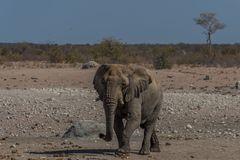 C1366 Namibia - Etosha