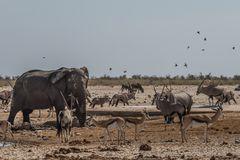 C1367 Namibia - Etosha