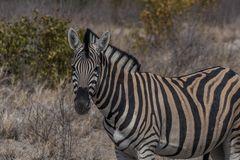C1405 Namibia - Etosha