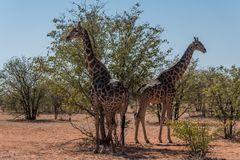 C1409 Namibia - Etosha