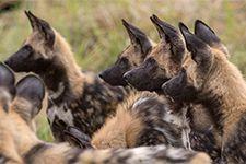 Thomas Retterath Wildlife und Reisefotografie