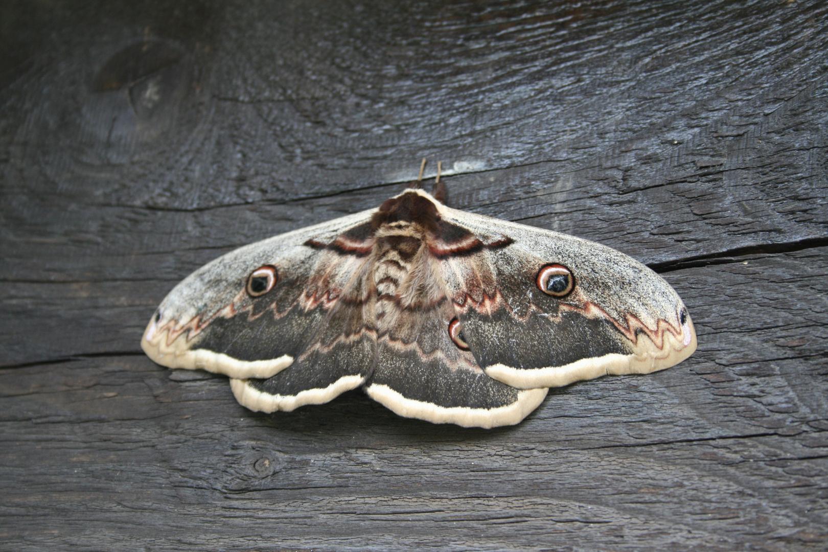 Ca doit être un papillon!!!!