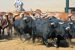 Caballos y toros