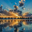 Cable Beach Camel Sunset 07