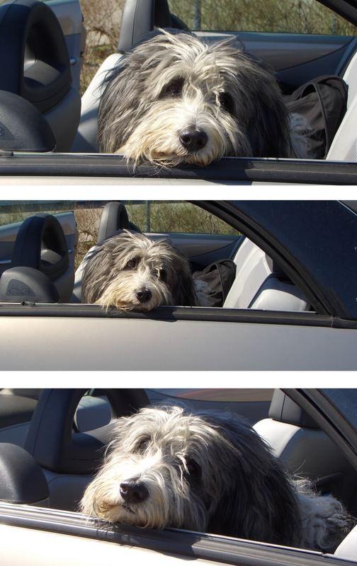 Cabriofahrer :-)