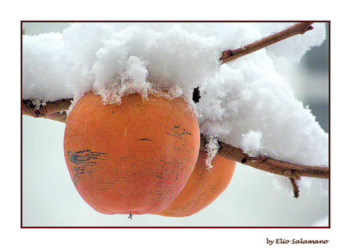 Cachi sotto la neve