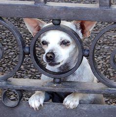 Cachorro curioso
