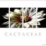 Cactaceae .....