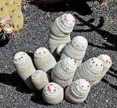 Cactus à tête chercheuse ?