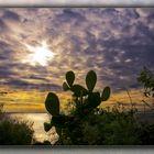 cactus al tramonto