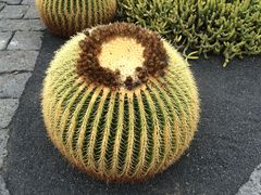 """""""Cactus"""""""
