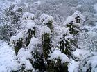 Cactus con nieve