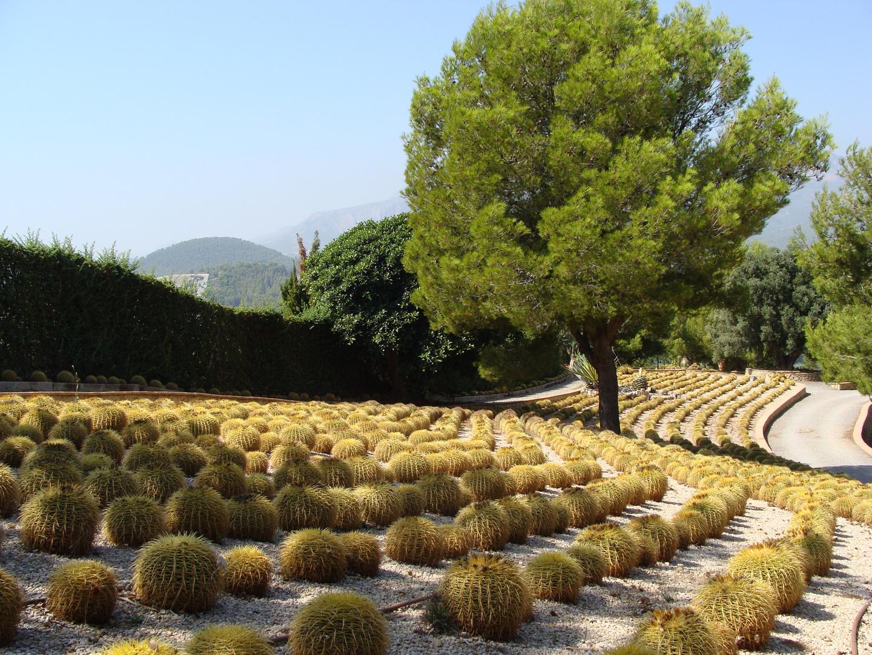Cactus de suegra