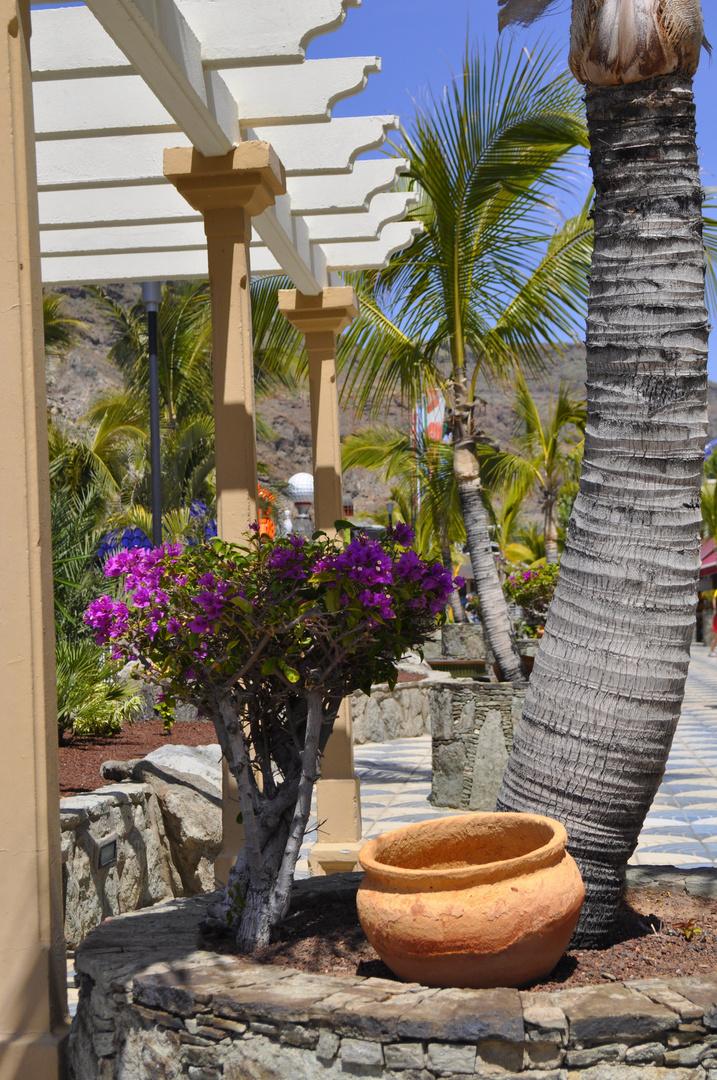 Cactus et arbre fleuri des Gran Canaria