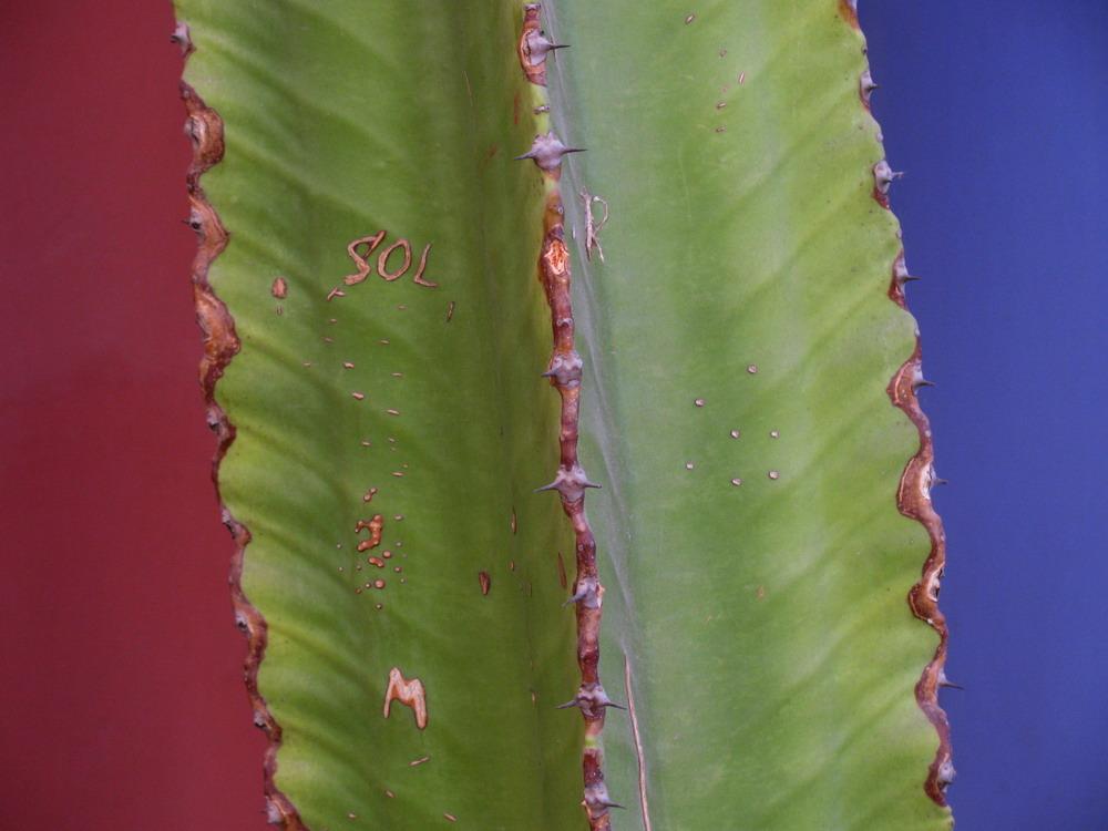 Cactus et couleurs