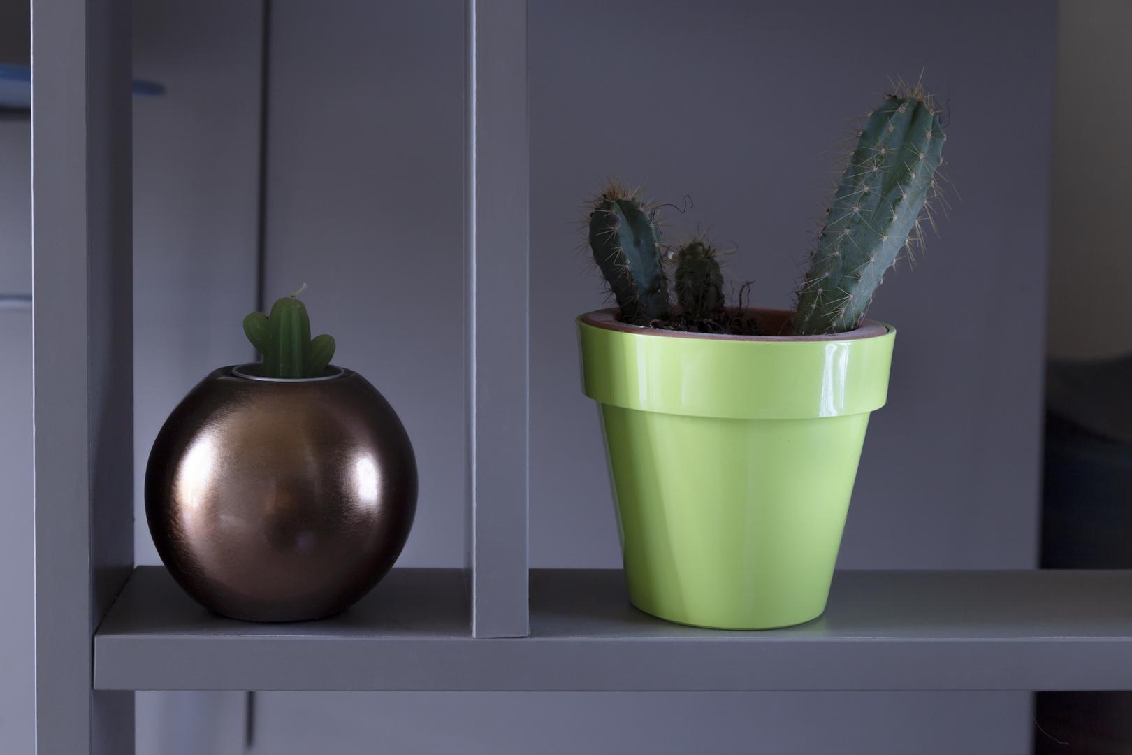 cactus, false and true