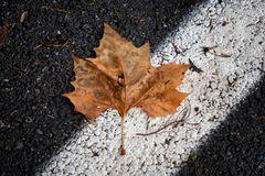 Cadono le foglie...