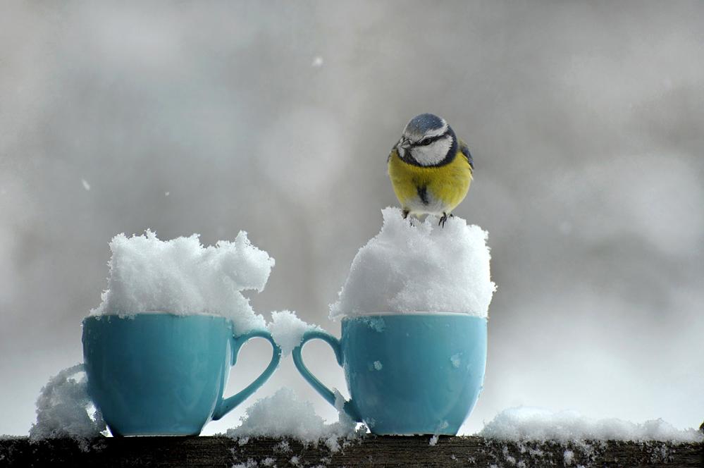 Café con crema . . .