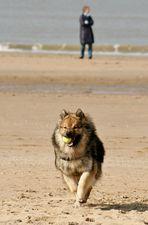 Caius am Strand von Noordwijk (13)