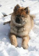 Caius von der Eschenburg 14 Wochen alt im Winterurlaub