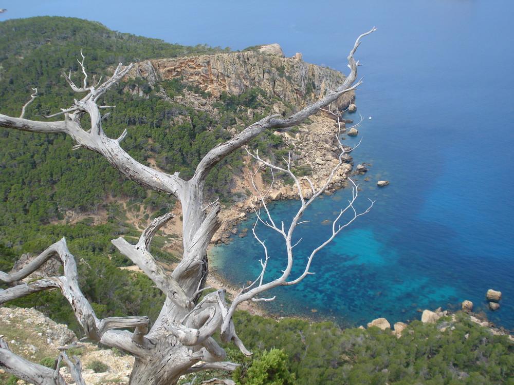 Cala en Basset (en Sa Trapa). Mallorca