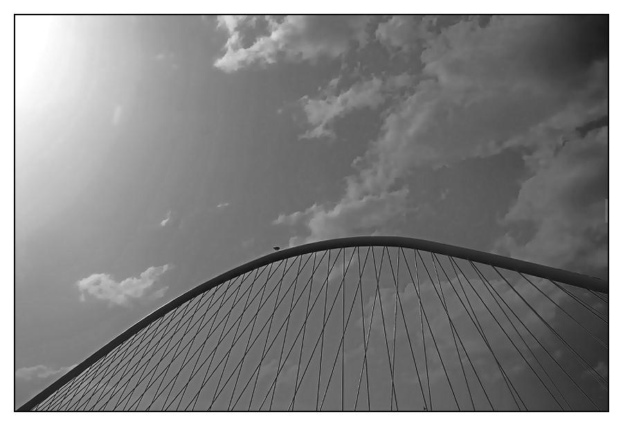 Calatrava und die Möve