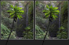 Caldeirão Verde auf Madeira [3D]