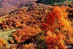 ...caldo autunno...