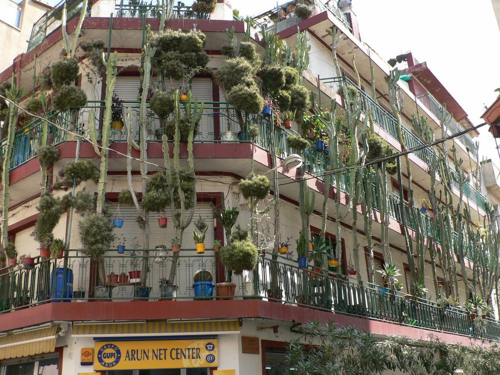 Calella - casa de los cactus