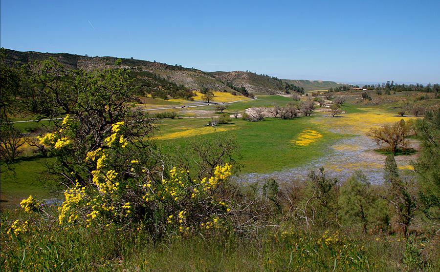 """California Wildflowers"""
