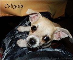 Caligula Bild 2
