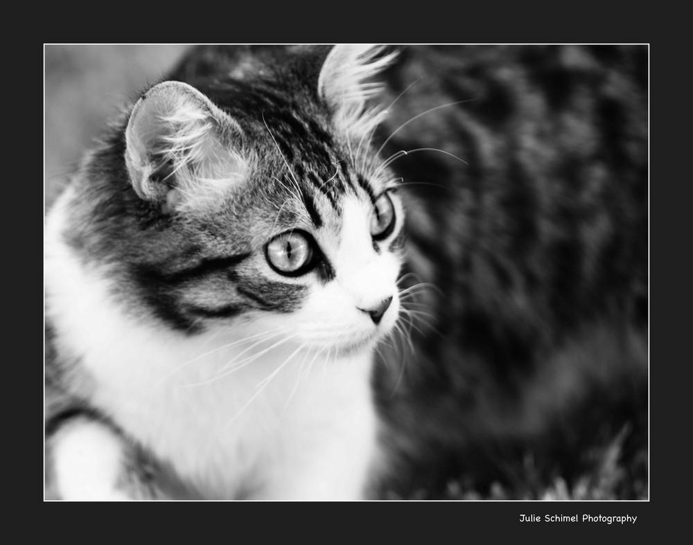 Cali_my cat!